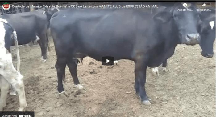 Controle de MAMITE (MASTITE BOVINA) e CCS no LEITE com produto da Expressão Animal