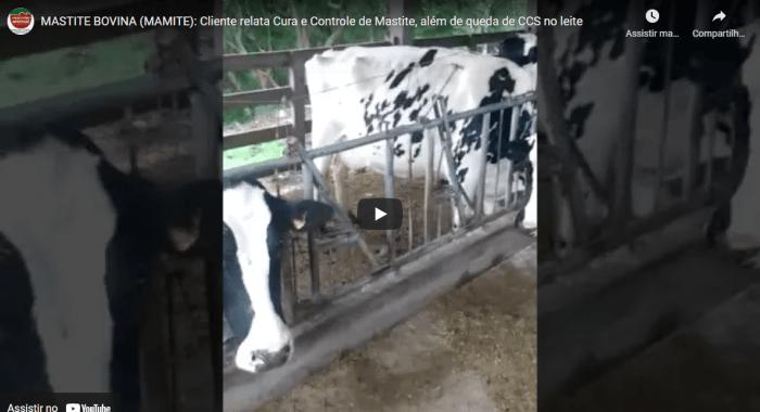 Controle de MAMITE, Redução de Células Somáticas no Leite (CCS) e sem descarte de leite; com o uso de Mamite Plus da Expressão Animal