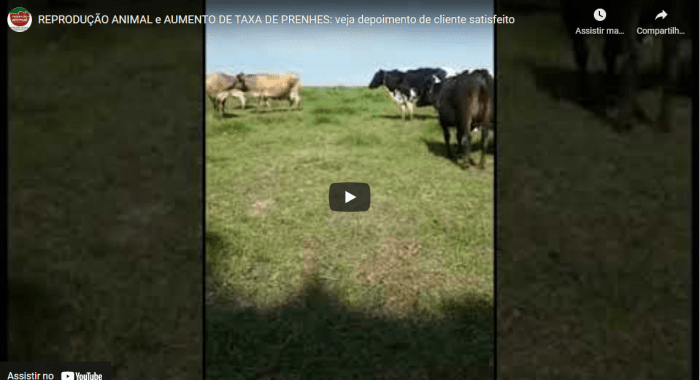 Aumento de TAXA DE PRENHES (REPRODUÇÃO ANIMAL), com o uso de FÉRTIL PLUS e SAÚDE PLUS, produtos da EXPRESSÃO ANIMAL