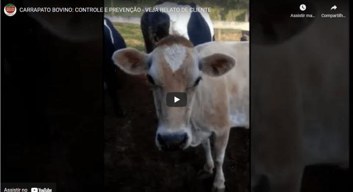 Dificuldade que sempre teve em Controlar Carrapato nas Vacas até usar Parasito Plus e obter solução