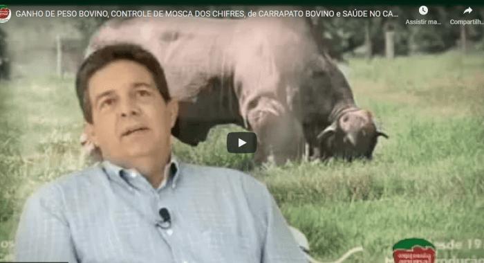 Aumento de GANHO DE PESO BOVINO, CONTROLE DE MOSCA-DOS-CHIFRES e CARRAPATO BOVINO no Rebanho, além de tratamento e Cura de PODRIDÃO de CASCO (PODODERMATITE BOVINA); com o uso dos produtos da EXPRESSÃO ANIMAL