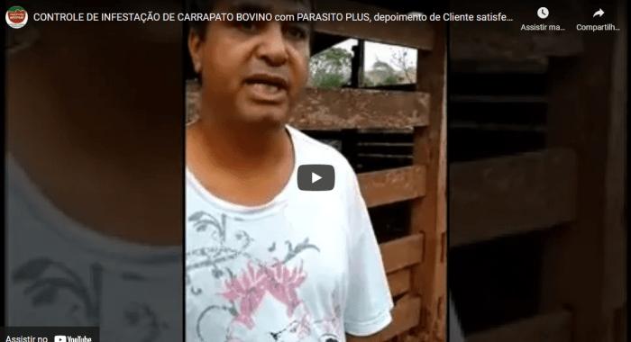 Controle de INFESTAÇÃO DE CARRAPATO BOVINO com PARASITO PLUS