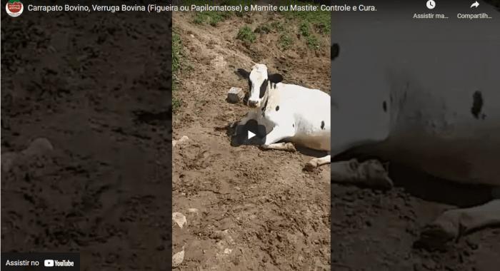 Cliente fala sobre CONTROLE DE CARRAPATO BOVINO, VERRUGA NO GADO (FIGUEIRA, PAPILOMATOSE BOVINA) e MAMITE (MASTITE BOVINA), com o uso dos produtos da Expressão Animal