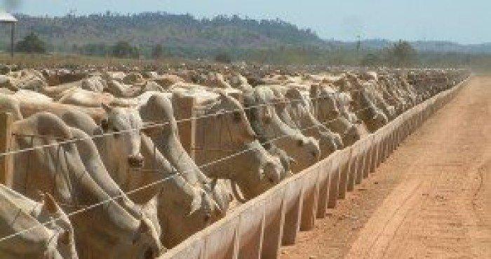 Confinamento de Bovinos: 5 Dicas para garantir produção Lucrativa